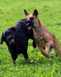hanhund eller hunhund